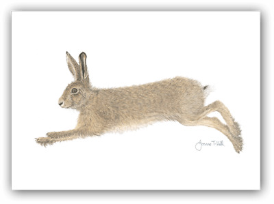 RUNNING HARE WILDLIFE GREETING CARD-Print From Original Drawing By Joanne T Kell