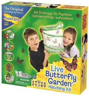 Live Butterfly Garden by Insect Lore -  5 caterpillars
