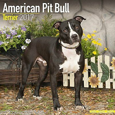 AMERICAN PIT BULL TERRIER 2017 Wall Calendar - 30x30cm - Great images