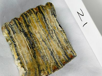 21) Genuine Woolly Mammoth TOOTH Slice Polished Fossil UK - Great Unique Gift
