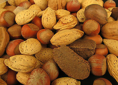 5 Pounds Mixed Nuts in Shell Pecans, Almonds, Brazil Nuts, Hazelnuts and Walnuts