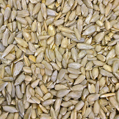 Organic Sunflower Seeds - 500g - Free Shipping