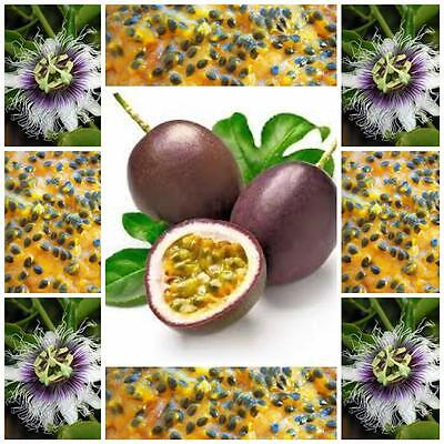 Passionfruit vine purple edulis 20 seeds fruit vegetable garden