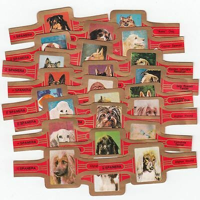 24 cigar bands Span Different With Dog Images red
