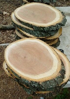 "8 Pc 11"" to12""Oak Log oval Slices Wood Disk Rustic Wedding Centerpiece Coaster"