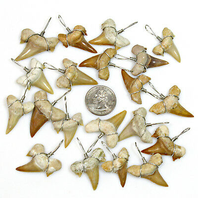 """100 Pc Lots XL 1-1/8""""+ Grade 'A' Wire Wrapped Shark Tooth Pendants Sharks Teeth"""
