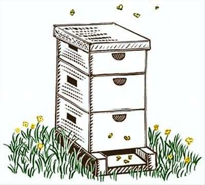 Beekeeping Guide And Beehive Plans With Bonus Extras On Cd