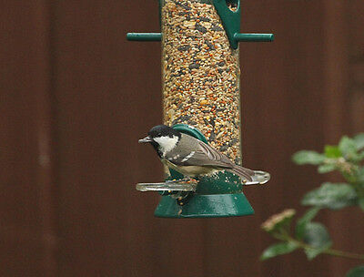 WILD BIRD SEED ALL YEAR ROUND SEED MIX FEED YOU CHOOSE FROM 50Gram TO 3.5Kg