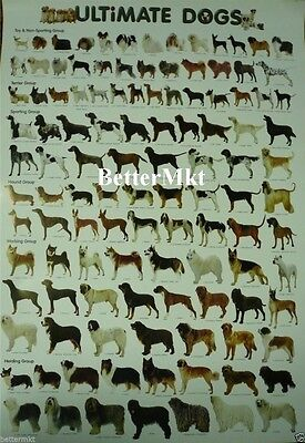 Ultimate Dog Breeds Wall Chart Educational POSTER 21.5x31 Inches More 80 Breeds