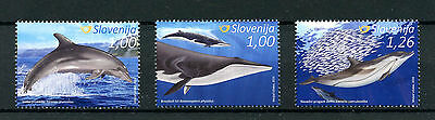 Slovenia 2016 MNH Whales & Dolphins 3v Set Marine Animals Stamps