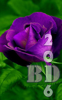 Fresh, 50pcs RARE Purple Roses Flower Seeds Garden Plant, Decor Garden - 122