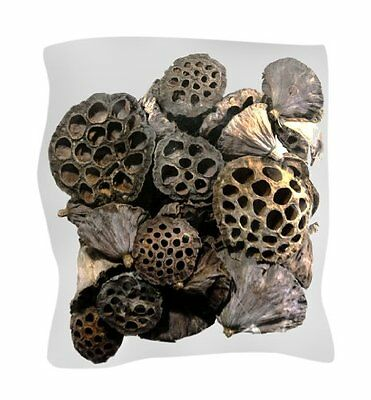 Supermoss (20802) 40-Piece Lotus Pods Brown Mixed Craft Super Moss New