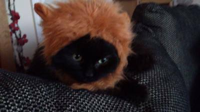 Pet Fluffy Lion Hat Cat Puppy Novelty Pet Clothing