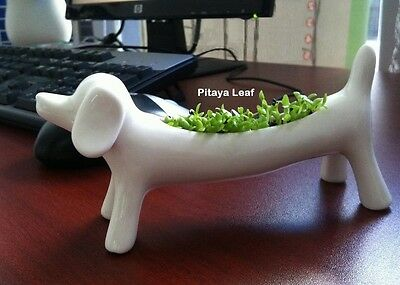 Dachshund Dog Tabletop Garden