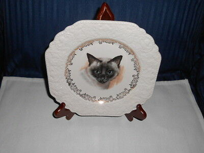 Gorgeous Old Lord Nelson Of England Siamese Cat Plate