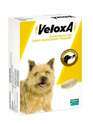 Veloxa Chewable Beef Flavoured Tablets for Dogs - 8 Pack