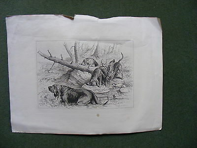 R.H.Moore,1886 Unframed Antique Print /Engraving Bloodhound Dogs River Hunting,