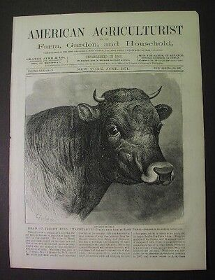 1871 print: JERSEY BULL - Bronxville NY; Swain breeder; drawn by Edwin Forbes
