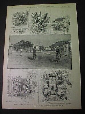 1884 print: JAMAICA scenes; West Indies; Leprosy, banana tree; St. Annis