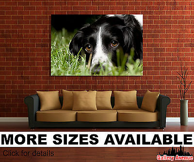Wall Art Canvas Picture Print - Cute English Springer Spaniel Dog 3.2