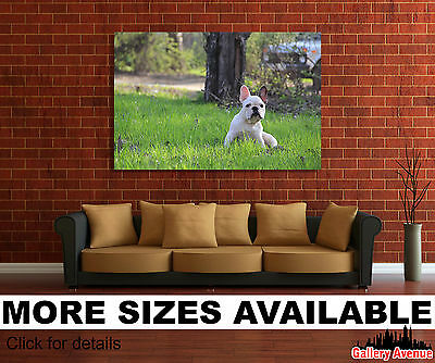 Wall Art Canvas Picture Print - Cute Dog French Bulldog Puppy 3.2