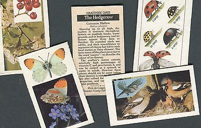 "Summer County Margarine 1975 Full Set Of 5 ""the Hedgerow"" Package Trade Cards"