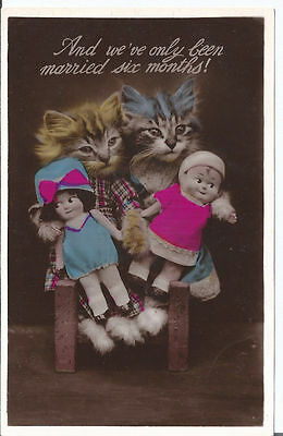 Vtg RPpc Dressed Kittens with Dolls - We've only been Married six Months