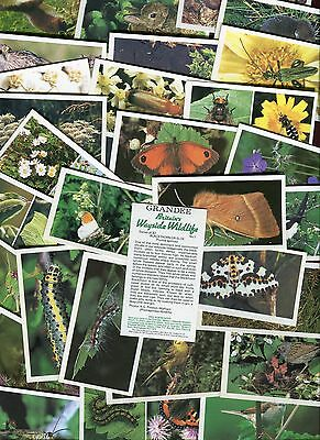 "Players Grandee 1988 Set Of 30 ""britains Wayside Wildlife"" Cigarette Cards"