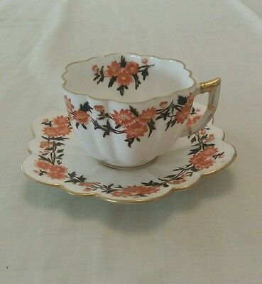 Wileman Co  Early Shelley Cup Saucer