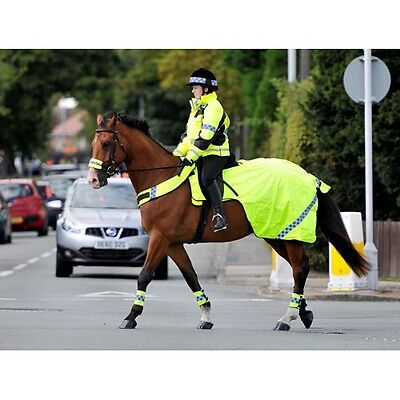 Equisafety Polite High Viz WINTER Padded Exercise Rug| Sheet | all sizes on sale