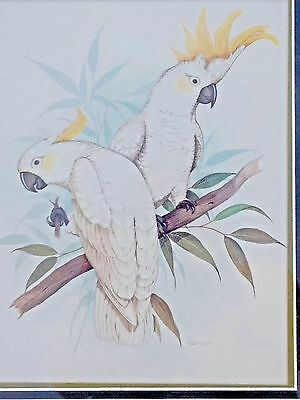"""Signed Watercolor Print """"Two Sulphur Crested Cockatoos"""" By Frank Massa-Framed"""