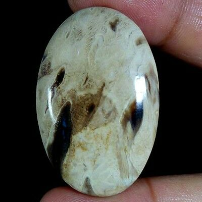 46.80Cts. Natural Designer Petrified Palm Agate Oval Cabochon Loose Gemstones