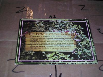 PRAYER OF THE WOODS PORTUGUESE ontario canada forest flowers tourist vacation