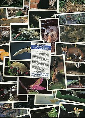 """Players Grandee 1987 Set Of 30 """"britains Nocturnal Wildlife"""" Cigarette Cards"""