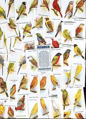 """Victoria Gallery 1987 Full Set Of 50 """"aviary And Cage Birds"""" Cigarette Cards"""