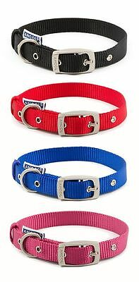 Ancol Dog Collar Plain Nylon Strong Adjustable Flat Buckle with Eyelets XS S M