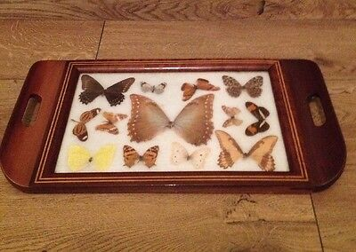 Vintage Real Butterfly Wooden Serving Tray