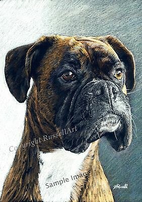 'Portrait' Brindle Boxer Dog A4 Sized Art print of original Drawing by S Russell