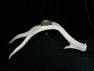 "Stag Deer Antler Candle Holder Sterling Silver Holder 20"" Long 4 Points Signed"