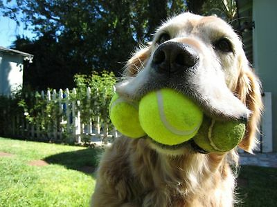60 Used Tennis Balls tennis training practice top seller instant shipping