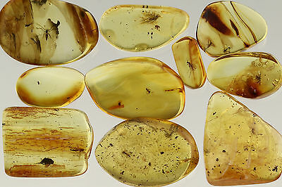 LOT of 10 Fossil INSECTS Inclusions BALTIC AMBER Stones 160915-13