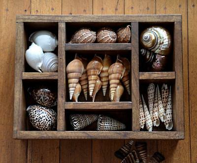 Shadow Box/Tray stained Teak