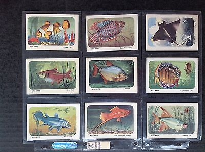 Cereal Foods Vita Brits Fish Of The Worlds Oceans 1959 Set/30 Trade Cards