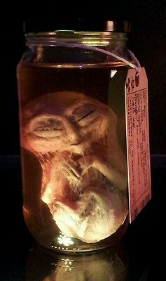 Alien Fetus / Embryo in Jar Roswell / Area 51 UFO / X Files / The Red Paintings