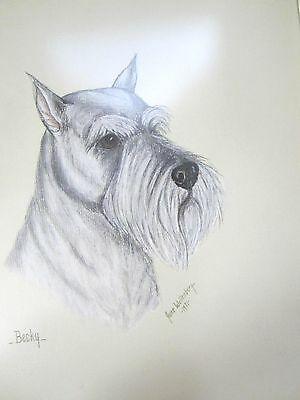 Original Drawing Of Schnauzer Dog Artist Signed & Dated
