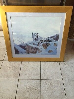 Large Framed Print Of A White Tiger