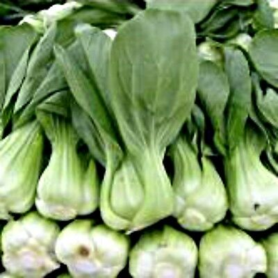 Chinese Cabbage Shanghai Paak Tsoi 150 seeds Asian Vegetable Seeds Asian Greens