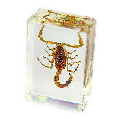 Real Scorpion Paperweight Small Size (PW108)