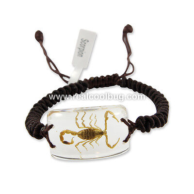Real Scorpion Bracelet Clear Scorpion Collection (SL05)