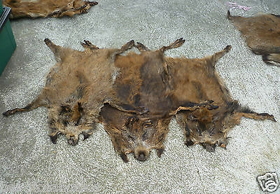 Wild european boar skin fur rug hide collectible fireplace (set of 3 furs)